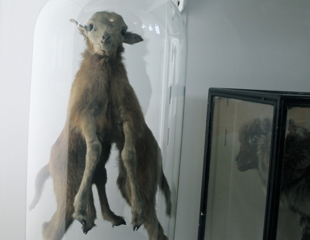 My favourite member of the taxidermy gang